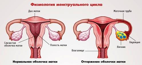 Может ли на ранних сроках беременности