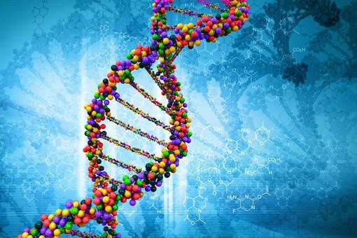 Серебряное ДНК Pcr2