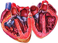 Если клапан сердца не закрывается до конца, что это значит?