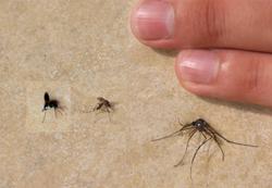 Укусы комаров - чем намазать, чтобы не чесалось?