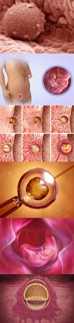 Выделения после переноса эмбрионов при ЭКО: коричневые и кровянистые, водянистые, со сгустками