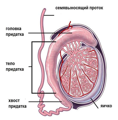 Осложнения при хламидиозе лечение