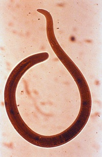 тест на наличие паразитов в организме человека