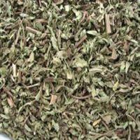 Трава вербена полезные свойства и противопоказания применение