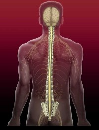 Невралгия грудного отдела и температура