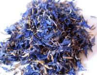 Василек синий – свойства и применение василька в медицине