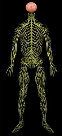 Синдром вегетативной дисфункции: причины, диагностика и лечение