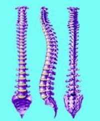 Боли в мышцах спины вдоль позвоночника