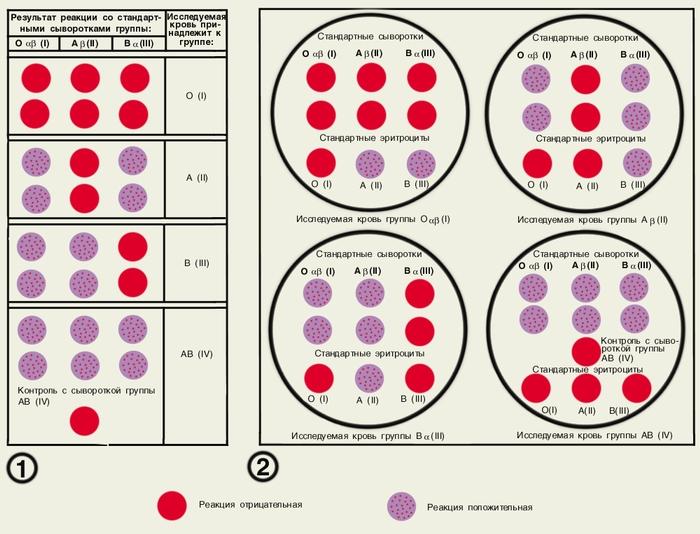 сдать кровь на определение группы крови