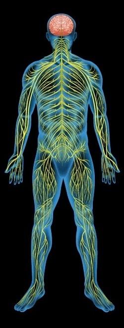 Всд и боли в суставах и мышцах