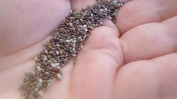 Семена чиа - виды, полезные свойства, противопоказания, рецепты приготовления