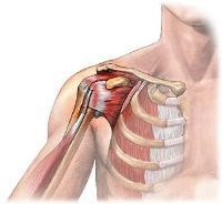 Боль в плечевом суставе - причины возникновения, характер, методы ...