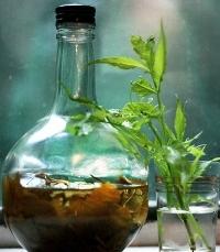 Аралия маньчжурская — лечебные свойства и противопоказания, применение настойки в бодибилдинге