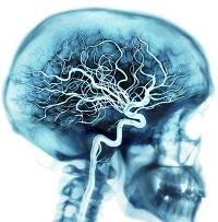 Как цитофлавин влияет на артериальное давление