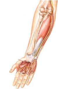 Боль в локтевом суставе с внутренней стороны руки лечение