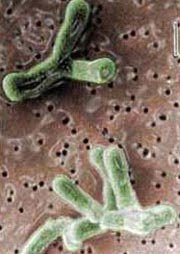 меню при лечении от паразитов