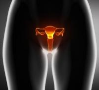 Применение софоры в гинекологии, онкологии и косметологии