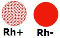 Обозначение групп крови и их совместимость