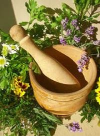 Живокость полевая (шпорник посевной): в чем польза и как применяют растение