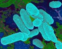 Группа антибиотиков клацид