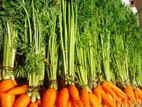 Помогает ли морковь при запорах