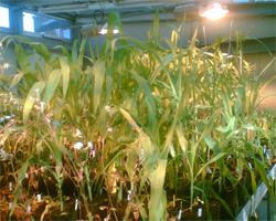 http://www.tiensmed.ru/news/uimg/ec/plant-gmo-1.jpg