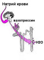 Как работают почки в организме человека видео - d7ccb