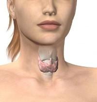 Для чего, когда и как сдавать анализ крови на гормоны