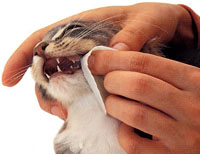 Зубной камень у кота как избавиться