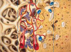 сколько длится пищевая аллергия