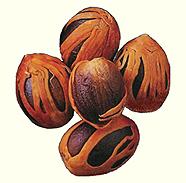 Мускатный орех в традиционной медицине