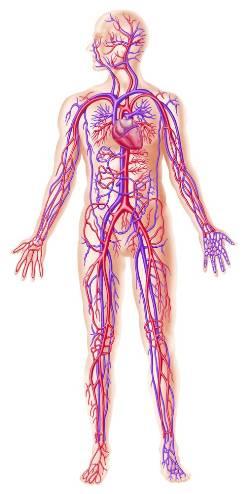 Антифосфолипидный синдром (АФС) – фото, виды, причины, симптомы и признаки. АФС у мужчин, у женщин, у детей