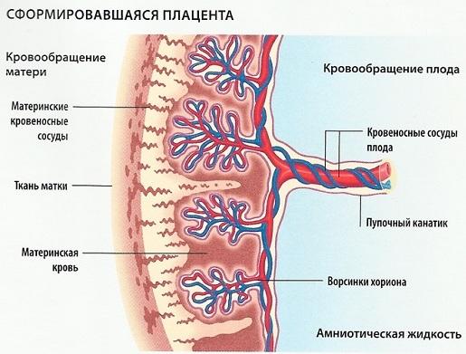 Гипоксия плода из за плаценты