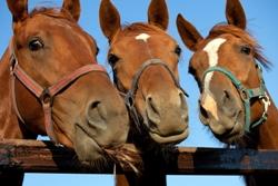 Терапия животными: Как дельфины, коты, свинки и лошади лечат людей — Wonderzine