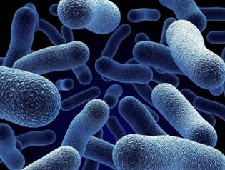 Кишечная инфекция: виды, причины, симптомы, лечение