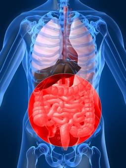Кишечная палочка – заболевания, пути передачи, симптомы кишечных инфекций и заболеваний мочеполового тракта (у женщины, у мужчины, у ребенка), методы лечения