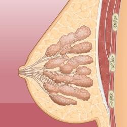 Маммолог – что он лечит? Кто такой онколог-маммолог, хирург-маммолог, гинеколог-маммолог? Где он принимает (больница, поликлиника)? Как записаться на прием к врачу для обследования молочных желез? Как получить консультацию?