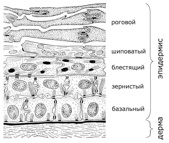 Морщины и их виды