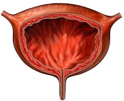 УЗИ почек при беременности: подготовка к исследованию, порядок проведения процедуры