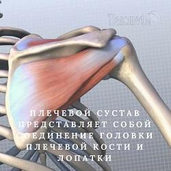 Что показывает протокол УЗИ голеностопного сустава