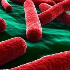 11 diseases horticultureworldnet